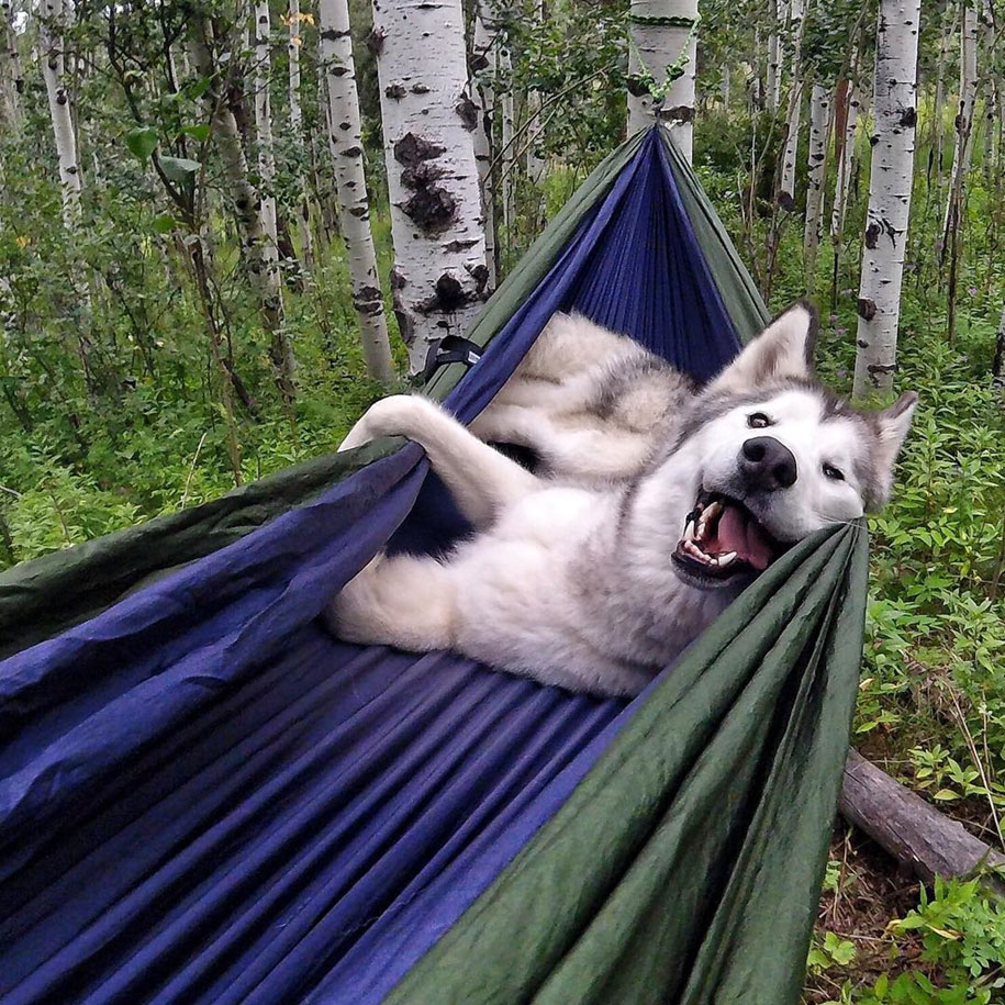 dog-nature-photography-loki-wolfdog-kelly-lund-10