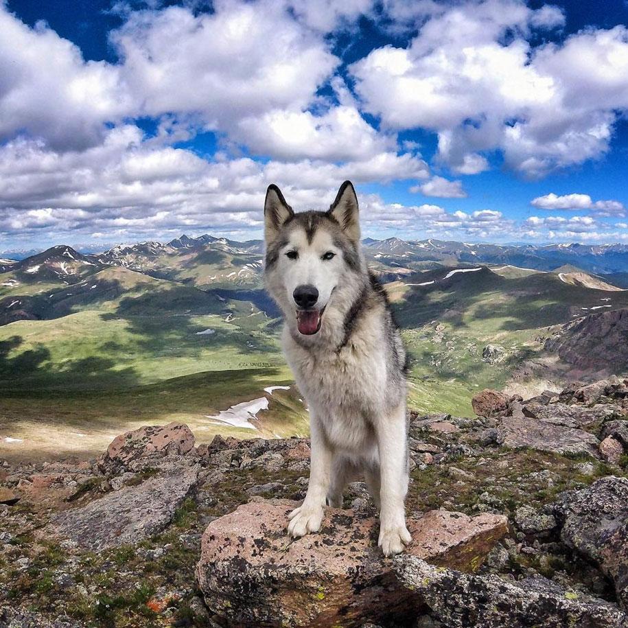 dog-nature-photography-loki-wolfdog-kelly-lund-16