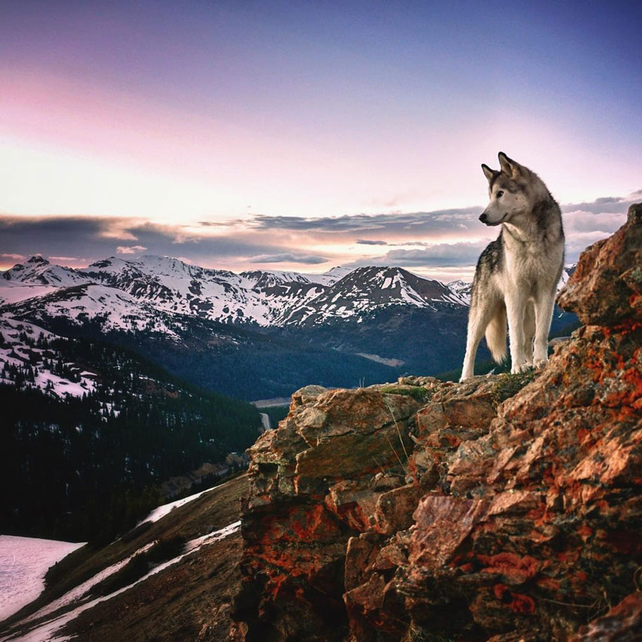 dog-nature-photography-loki-wolfdog-kelly-lund-17