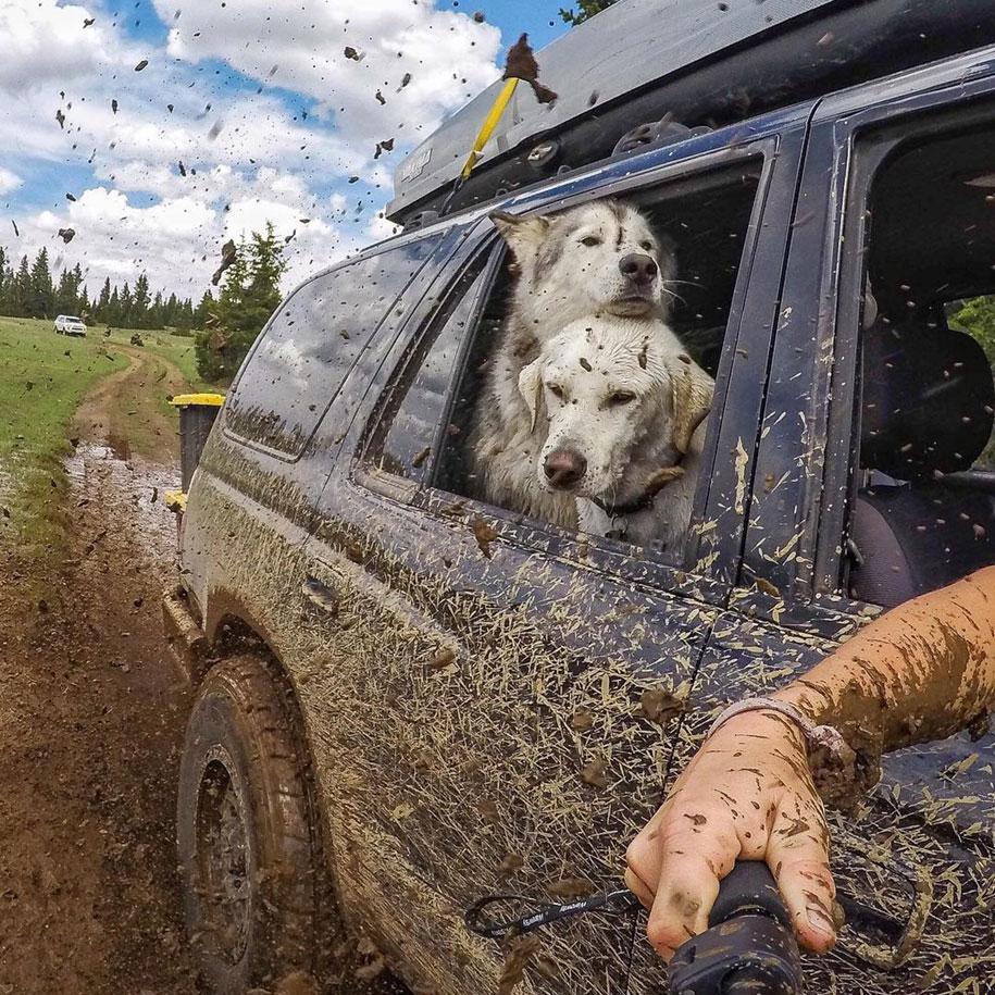 dog-nature-photography-loki-wolfdog-kelly-lund-24