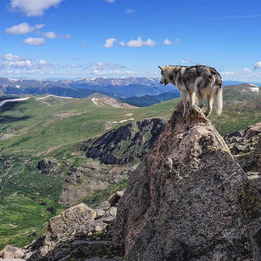 dog-nature-photography-loki-wolfdog-kelly-lund-32