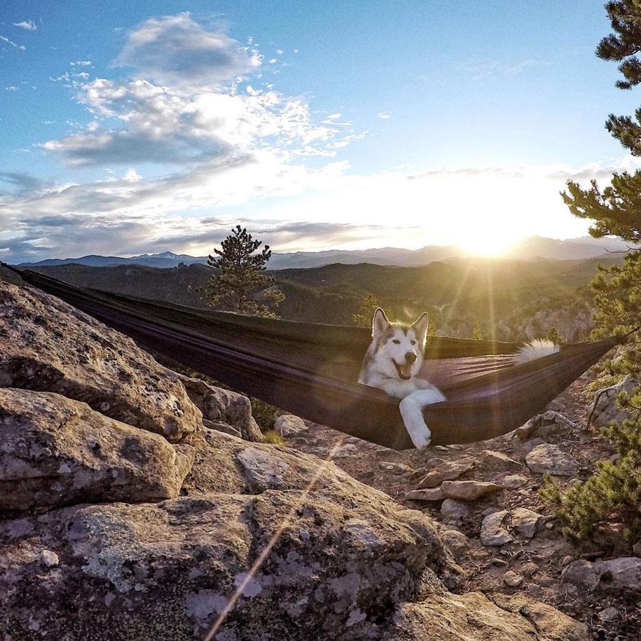 dog-nature-photography-loki-wolfdog-kelly-lund-36