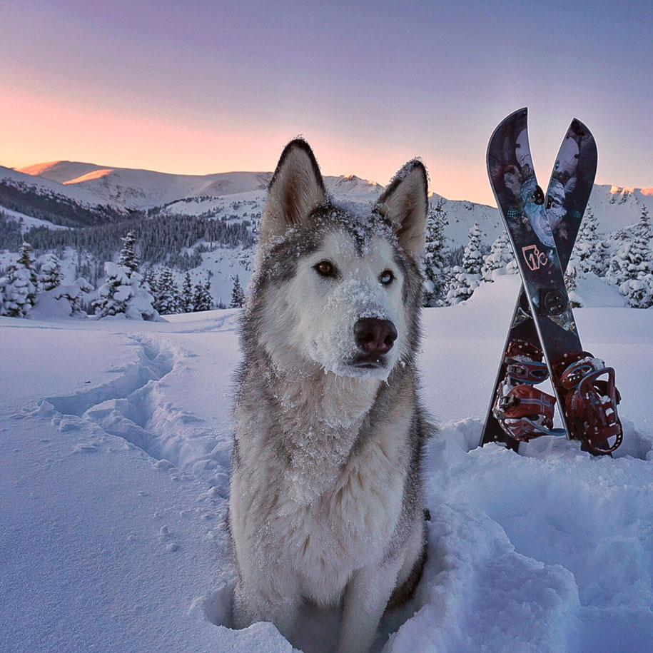 dog-nature-photography-loki-wolfdog-kelly-lund-38
