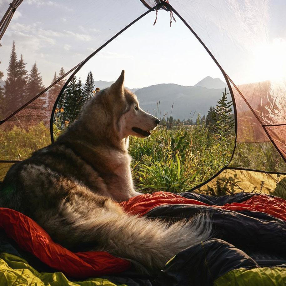 dog-nature-photography-loki-wolfdog-kelly-lund-7