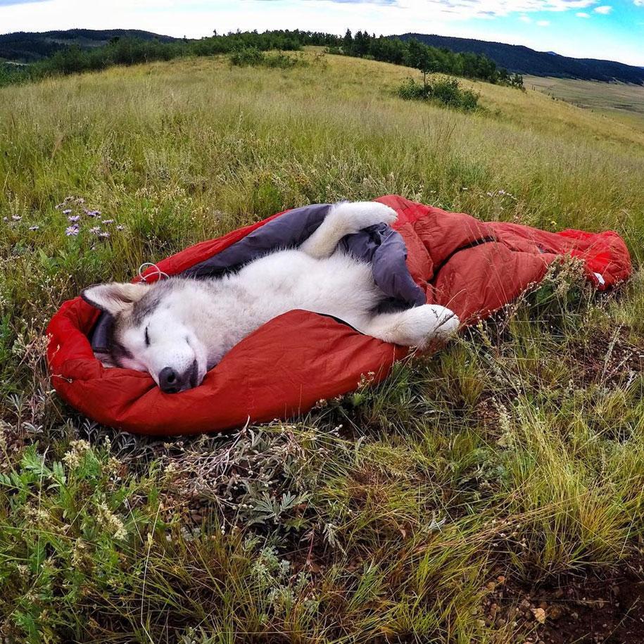 dog-nature-photography-loki-wolfdog-kelly-lund-8
